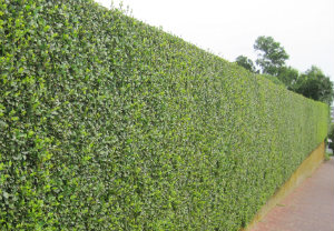 hedge-cutting-maintenance-southwark